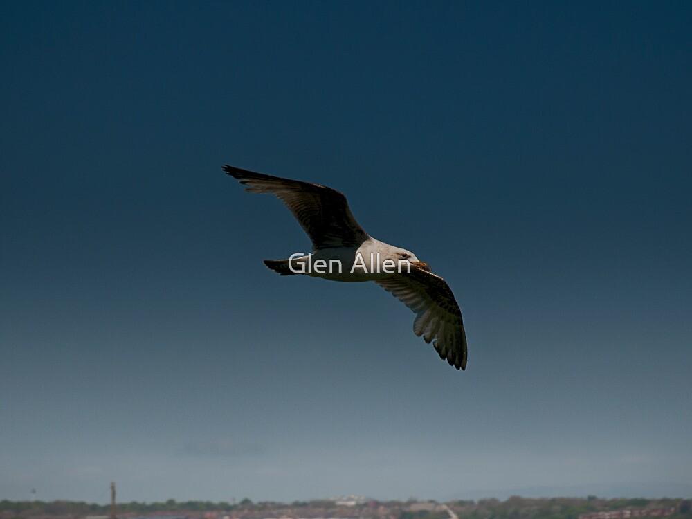 Gull Over the Town by Glen Allen