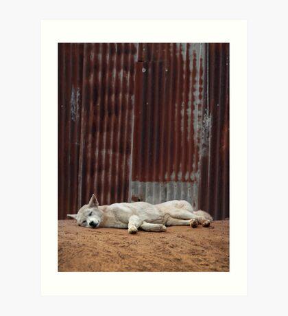 White Dingo Art Print