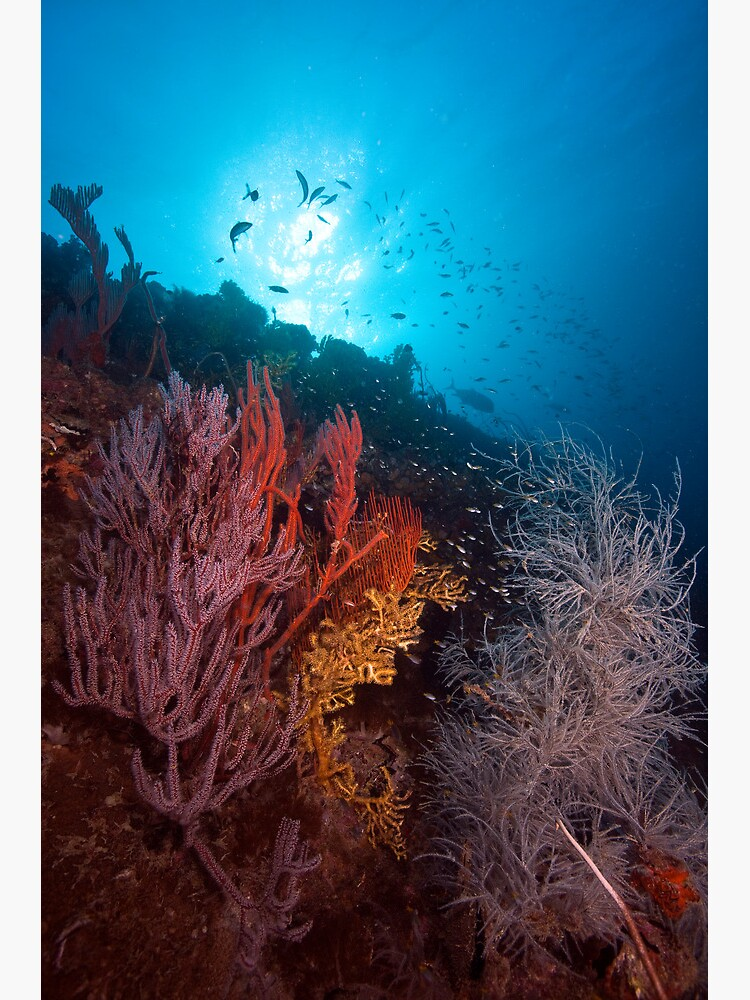 Coral on the wreck of the SS Yongala by DavidWachenfeld