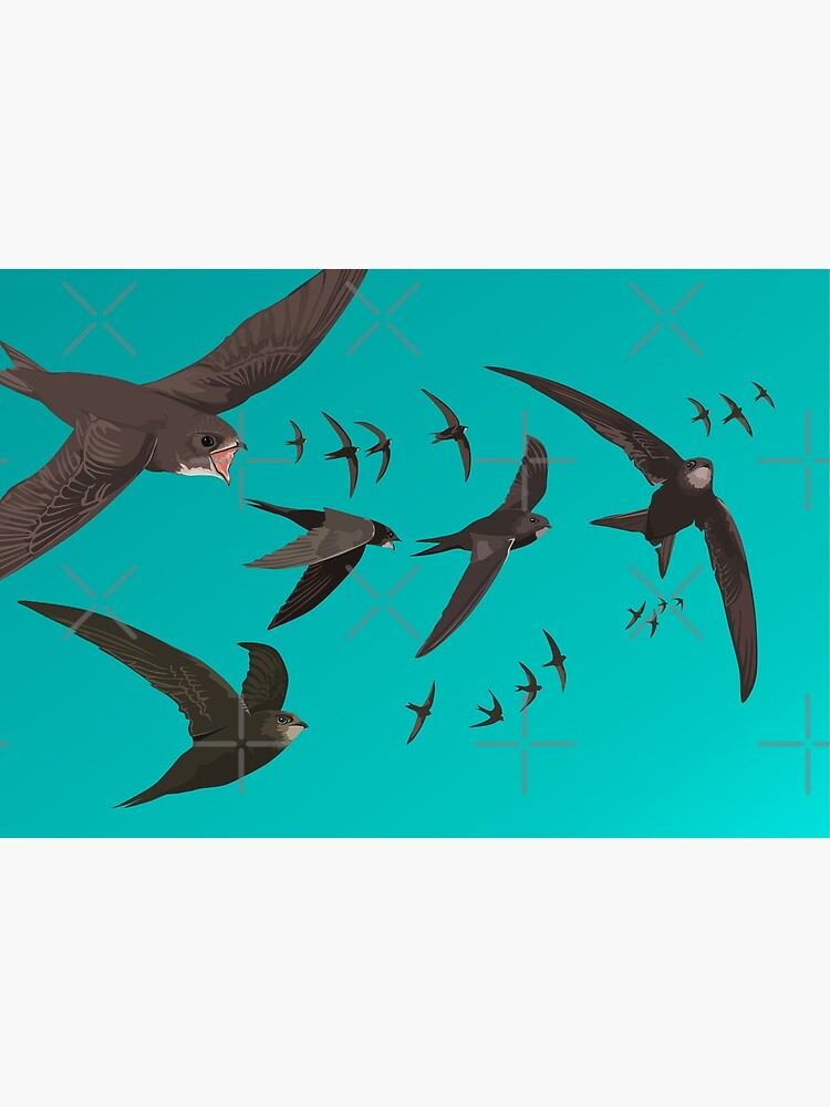Swifts Mask - Birdwatching Wildlife by LucyLapwing