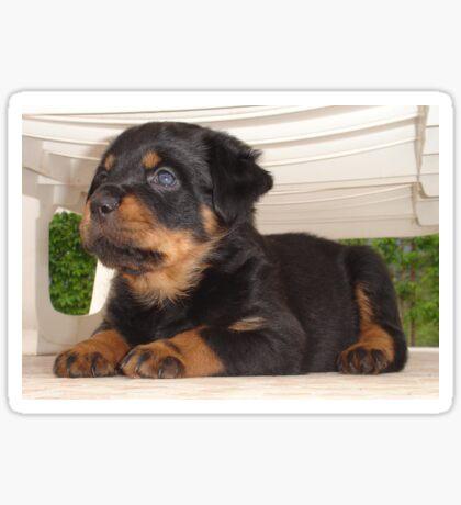 Cute Faced Rottweiler Puppy Side View Sticker
