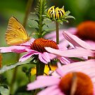 Butterflies and Blooms by Dennis Cheeseman