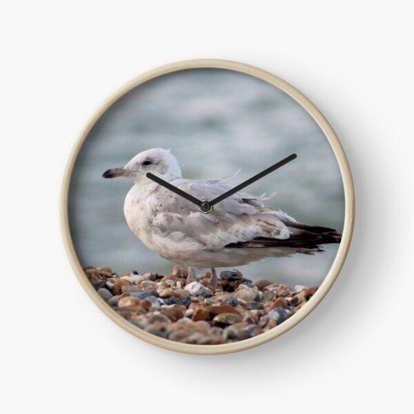 Seagull on stony beach Clock