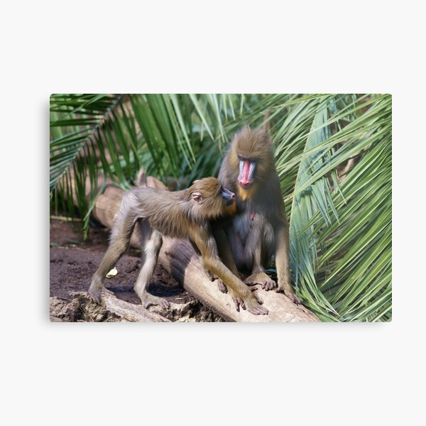 """""""mother and son"""" Metal Print"""