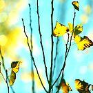 Twinkling Autumn Love by ShotsOfLove