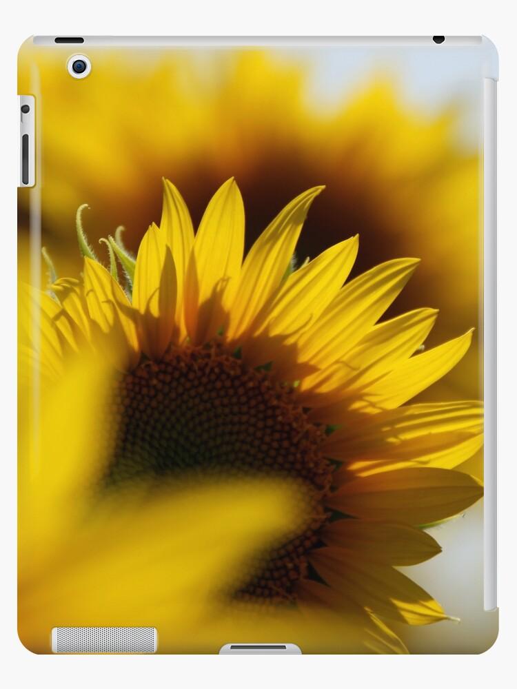 Sunflower...2 by shila353