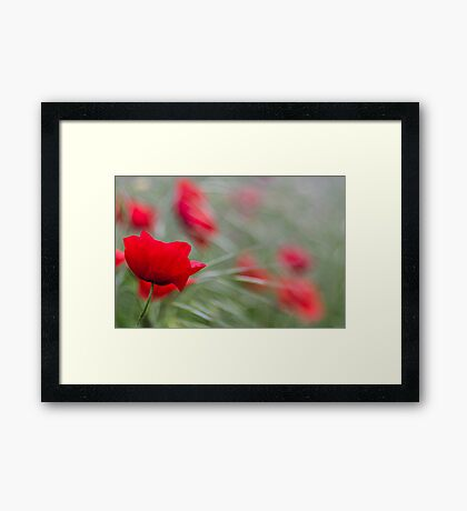 Poppy Love Framed Print