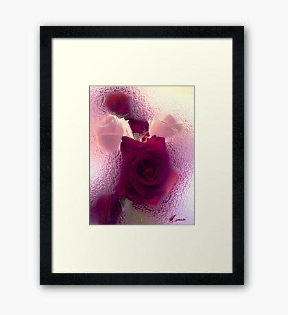 Canadian Rose Framed Print
