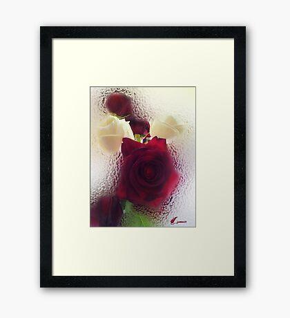 Rose de Marie Luise Framed Print