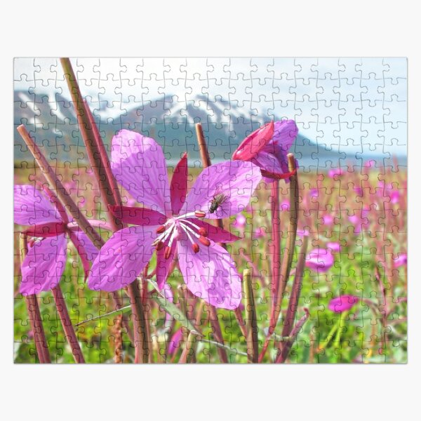 Watercolor Fly, House Fly 02, and Dwarf Fireweed, Dallvik, Iceland Jigsaw Puzzle