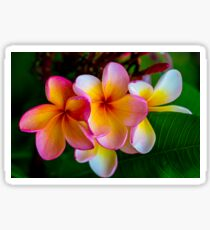 Tropical Beauty Sticker