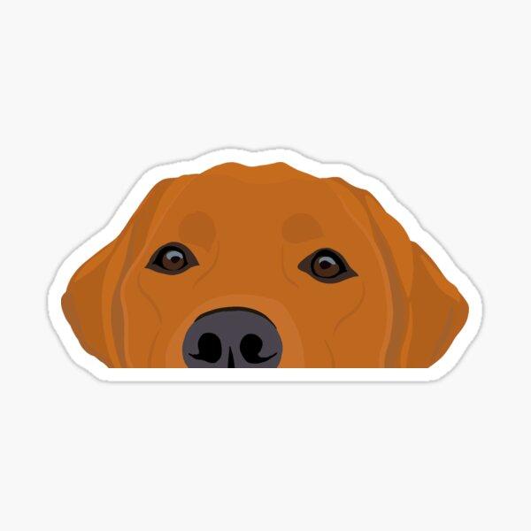 Curious Red Labrador Sticker
