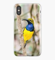 Olive-backed Sunbird iPhone Case/Skin