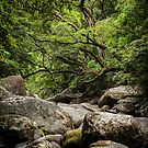 Daintree Rainforest - Mossman Gorge III by Richard Heath