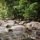 Daintree Rainforest - Mossman Gorge IV by Richard Heath