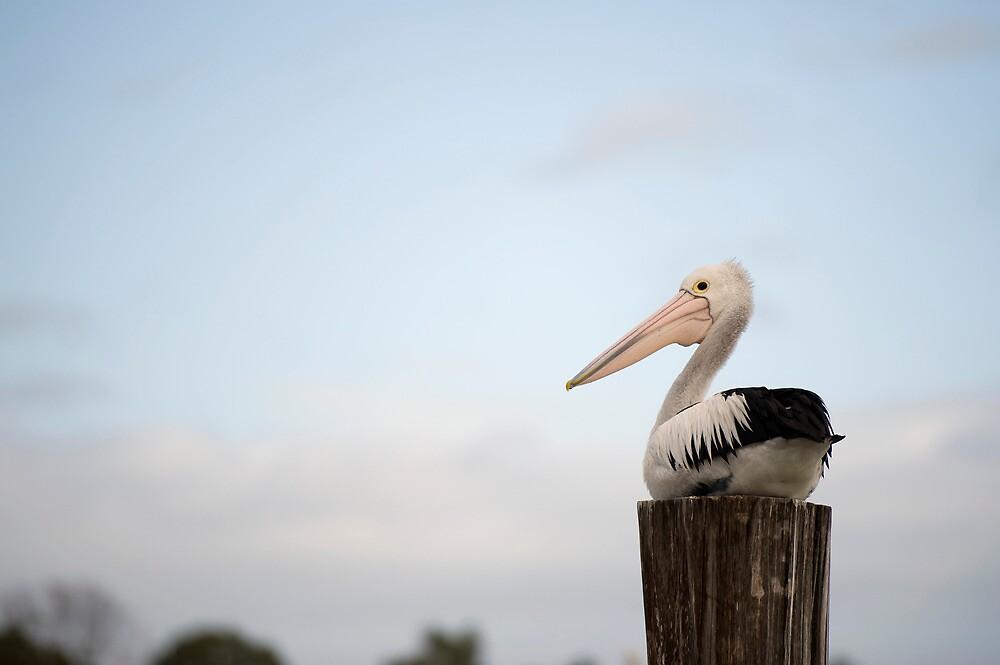 Pelican Perch by Jenny Dean