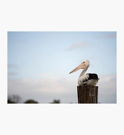 Pelican Perch Photographic Print