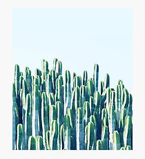 Cactus V2 #redbubble #home #lifestyle #buyart #decor Photographic Print