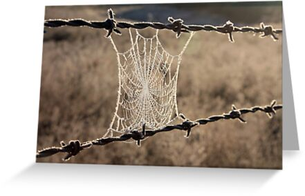 Frozen Web by Tim Coleman
