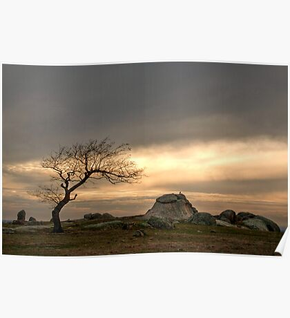 One Lonely Tree Poster