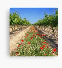Wine growing at spring time Leinwanddruck