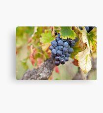 Wine Grap Leinwanddruck