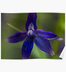 Macro Blue Flower Close Up Poster