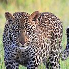 The male cub of the vomba female by jozi1