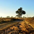 Country Road - Dunedoo NSW Australia by Bev Woodman