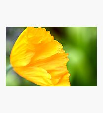 Sunny Times Photographic Print