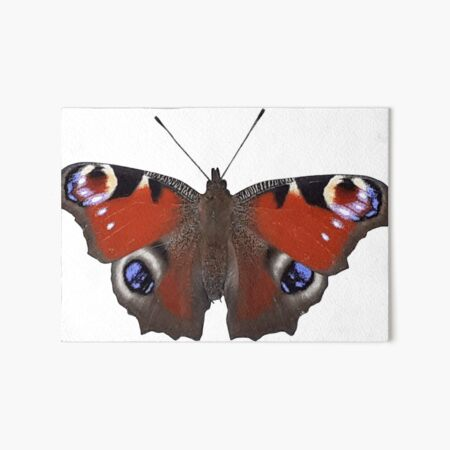 Red Admiral Butterfly Art Board Print