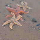 The Starfish by Carla Maloco
