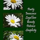 Common Daisy Collage Purity, Innocence and Love Greeting by taiche
