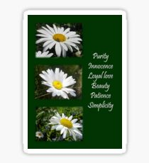 Common Daisy Collage Purity, Innocence and Love Greeting Sticker