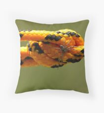 A Spider's Silk Throw Pillow
