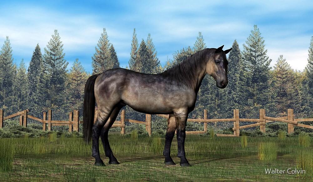 Grulla Color Horse by Walter Colvin