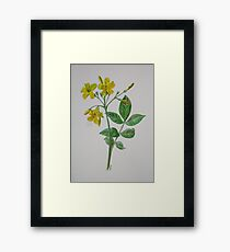 Carolina Jasmine Framed Print