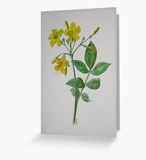 Carolina Jasmine Greeting Card