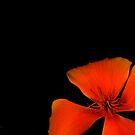 Orange flower by Neutro