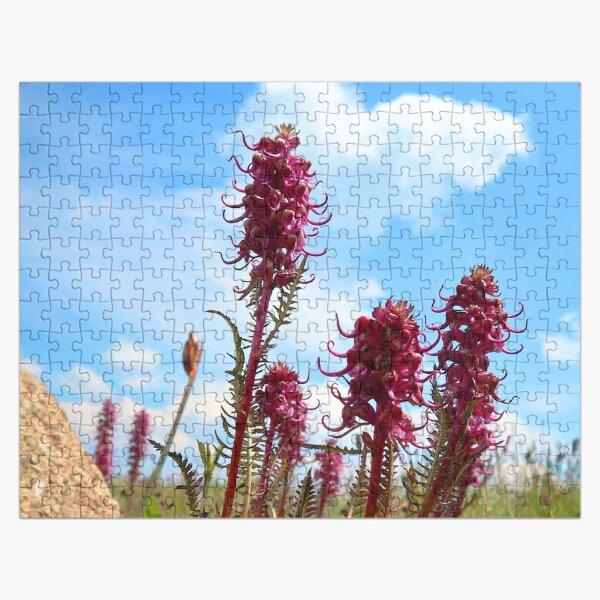 Watercolor Flower, Elephant's Nose 01, Niwot Ridge, Colorado Jigsaw Puzzle