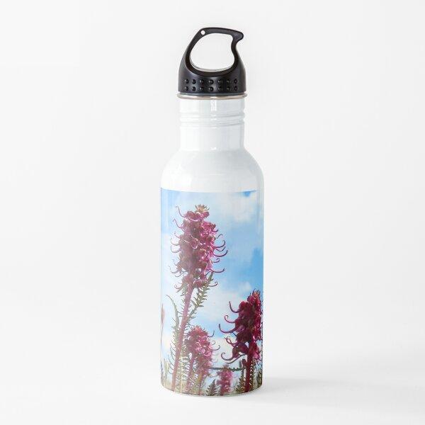 Watercolor Flower, Elephant's Nose 01, Niwot Ridge, Colorado Water Bottle