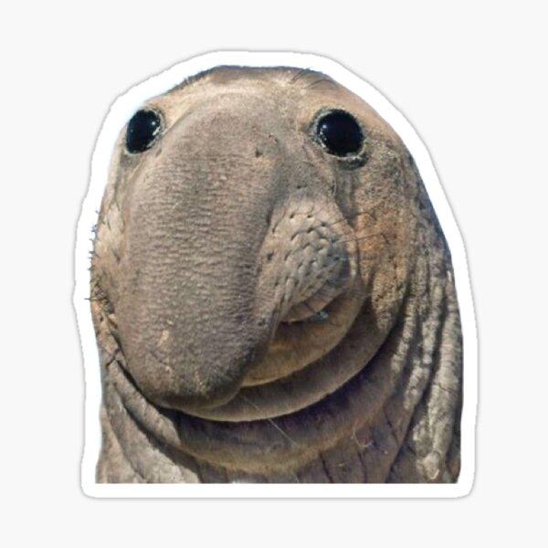 little seal buddy Sticker