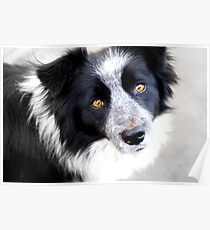 Pet Portrait - Chicane Poster