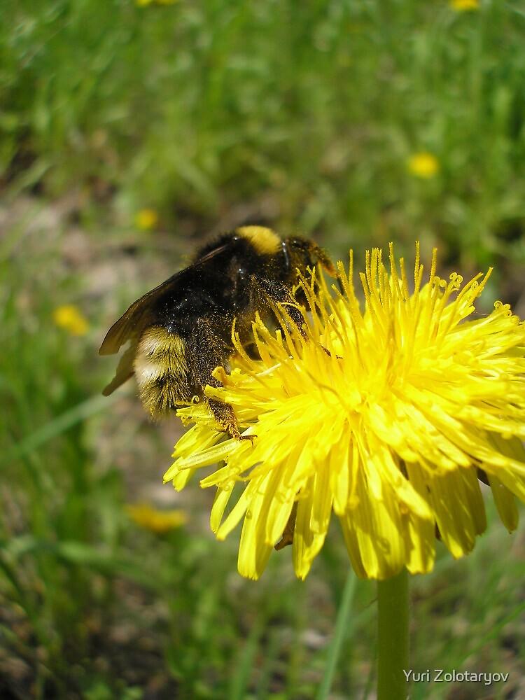 bumble-bee by Yuri Zolotaryov