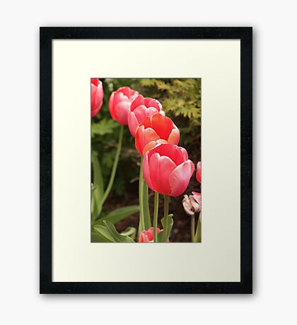 I have flower after flower for you Framed Print