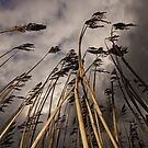 Tall Grass by George Crawford