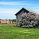 Moms Lilac Barn by cherylc1
