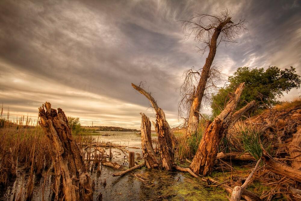 Swamp Alter by Bob Larson