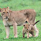Tsalala mom and cub by Anthony Goldman