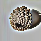 Pinecone by Sorcha Whitehorse ©